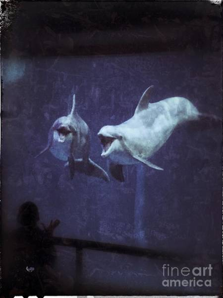 Dolphinspiration Poster