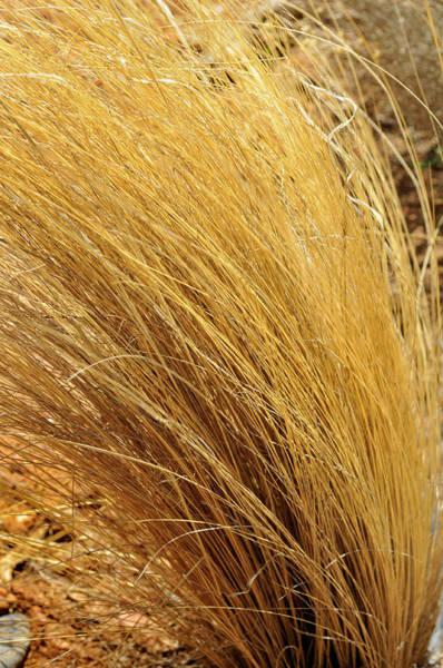 Dried Grass Poster