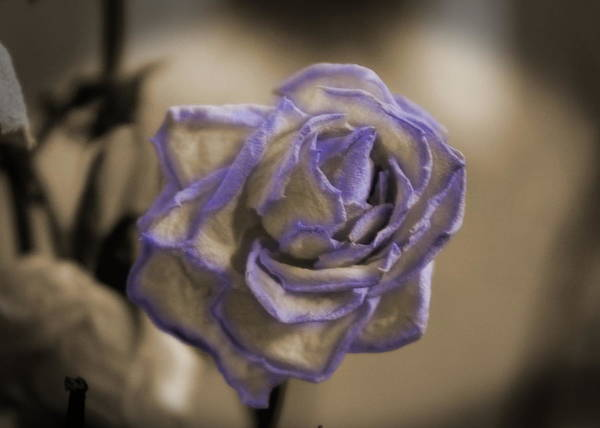 Dried Rose In Sienna And Ultra Violet Poster