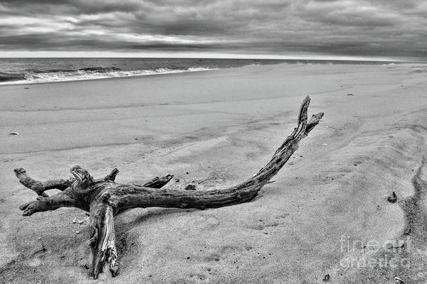 Driftwood On The Beach In Black And White Poster