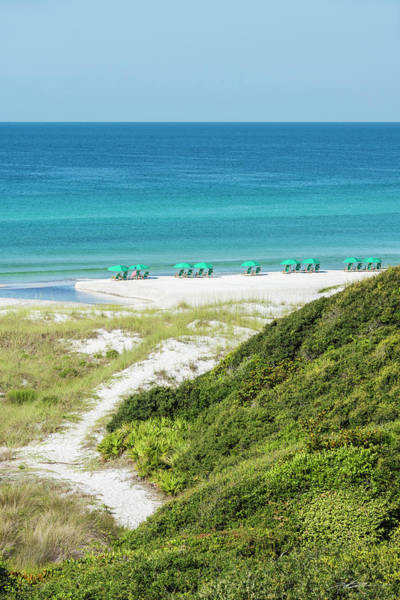 Dune Trail To The Gulf Poster