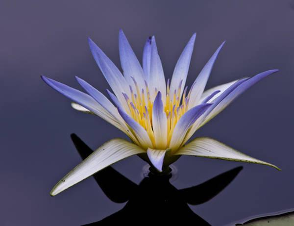 Egyptian Lotus Poster