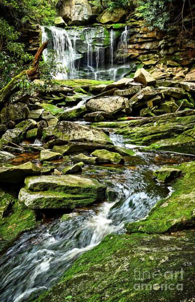 Elakala Falls At Blackwater Falls State Park Poster
