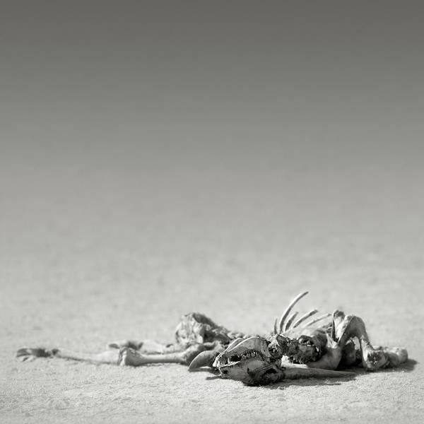Eland Skeleton In Desert Poster