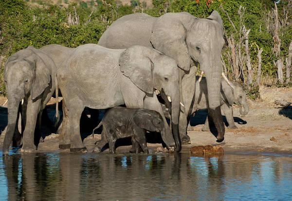 Elephant 3 Poster