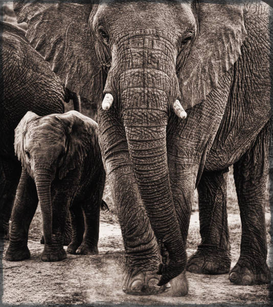 Elephant Family Time Poster