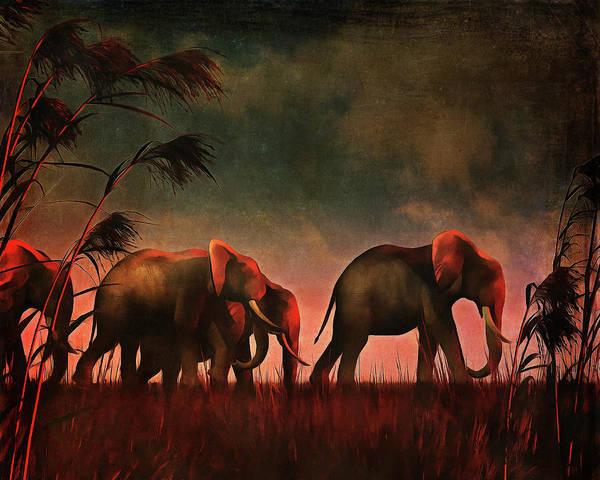 Elephants Walking Together Poster