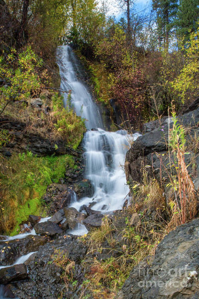 Elk Creek Waterfall Waterscape Art By Kaylyn Franks Poster
