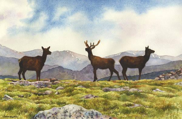 Elk In The Evening Poster