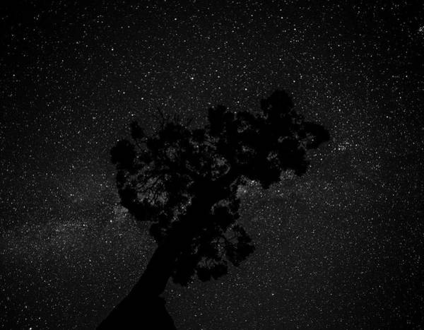 Empty Night Tree Poster