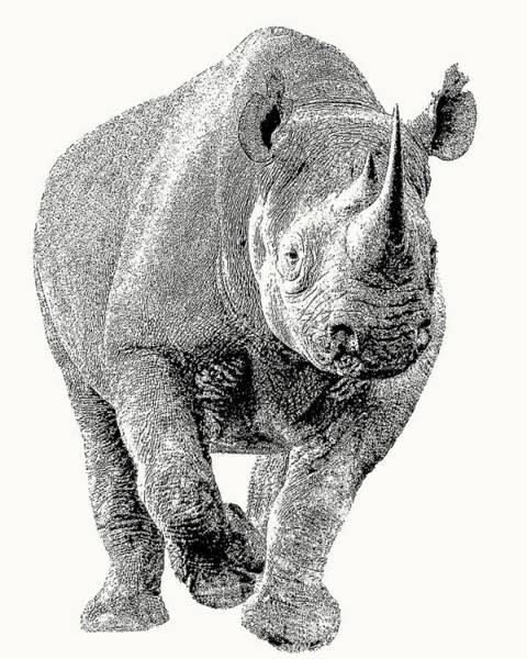 Endangered Black Rhino, Full Figure Poster
