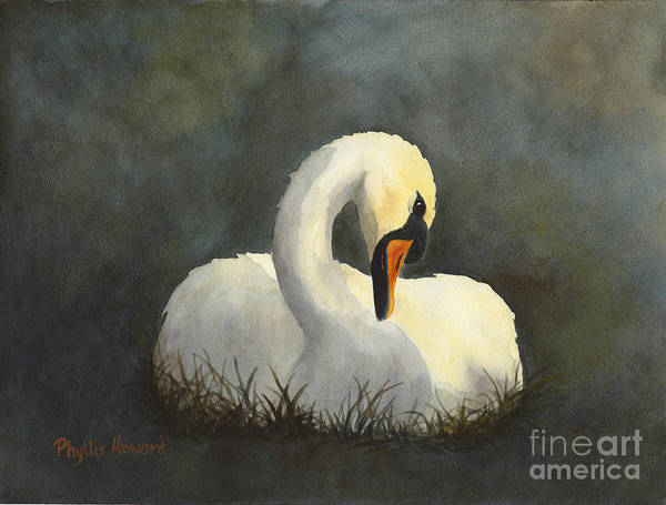 Evening Swan Poster