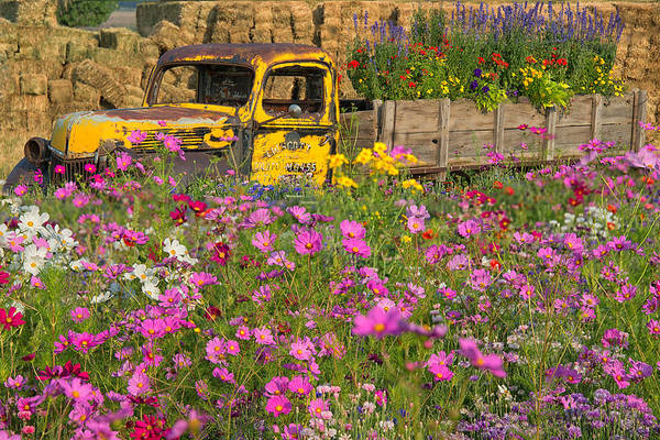 Poster featuring the photograph Explosion Of Wildflowers by Darlene Bushue