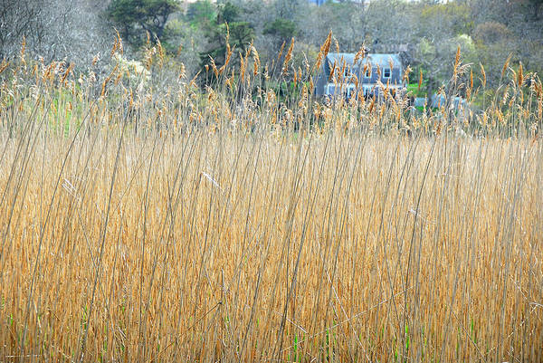 Poster featuring the photograph Fall Grass by AnnaJanessa PhotoArt