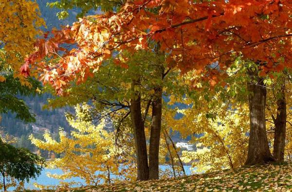 Fall In Kaloya Park 4 Poster