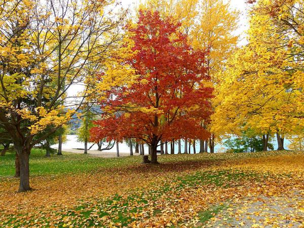 Fall In Kaloya Park 5 Poster