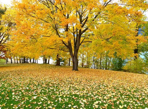 Fall In Kaloya Park 7 Poster