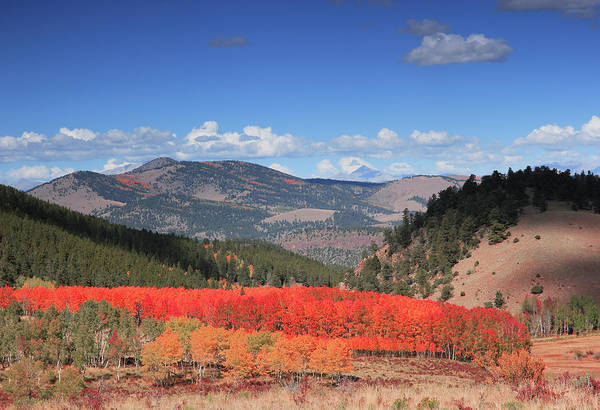 Fall In  Ute Trail  Poster