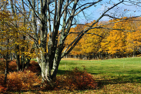 Fall Pasture Poster