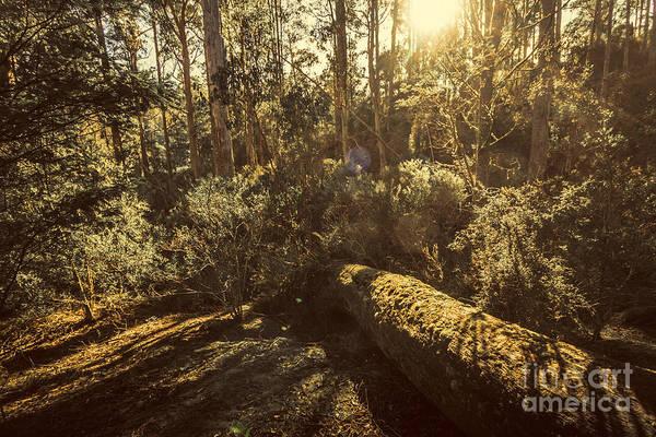 Fallen Tree In Foliage Poster