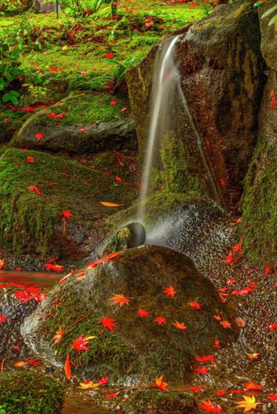 Falls In Seattle Japanese Garden Poster