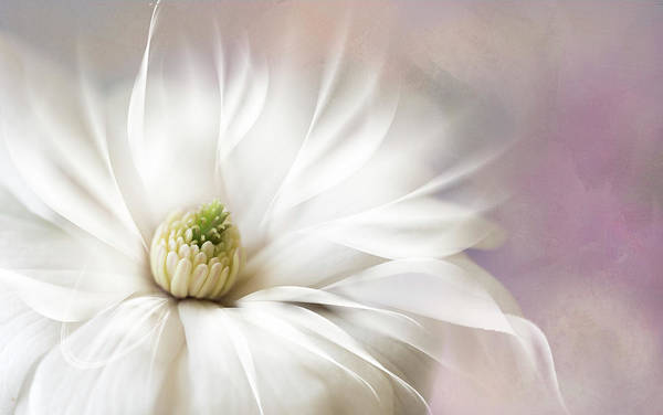 Fantasy Flower Poster