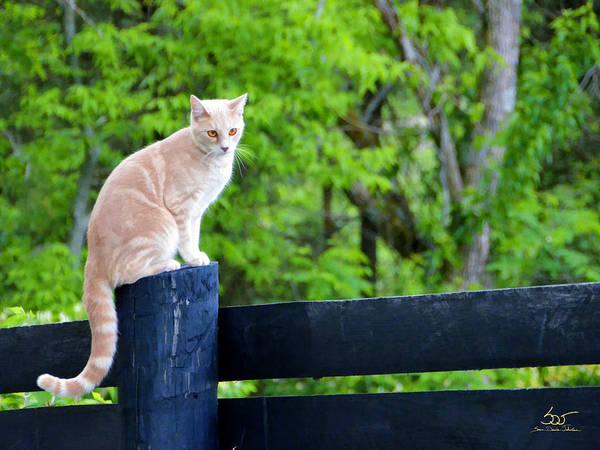 Poster featuring the photograph Farm Cat by Sam Davis Johnson