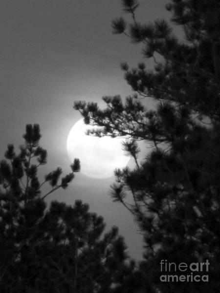 Favorite Full Moon Poster
