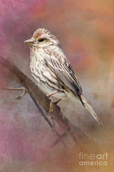 Female Sparrow On Branch Ginkelmier Inspired Poster