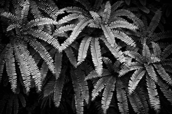 Fern And Shadow Poster