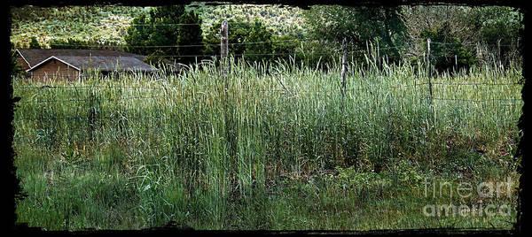 Field Of Grass Poster