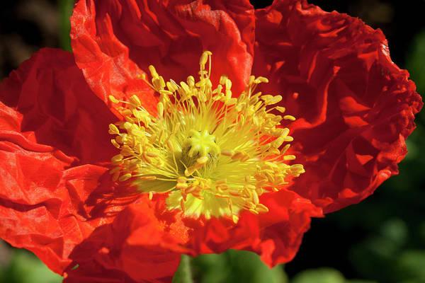 Firery Flower Poster