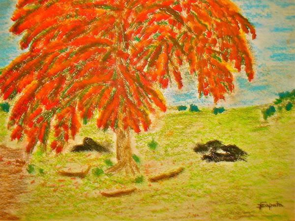 Flamboyan-tropical Splendor Poster