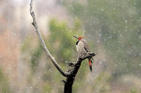 Flicker In The Rain Poster