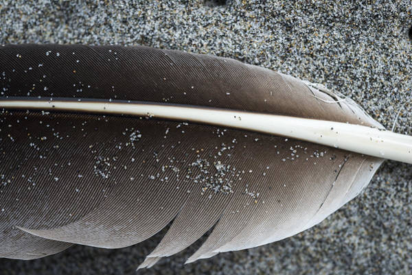 Flight Feather Poster