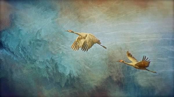 Flight Of Fantasy, Sandhill Cranes Poster