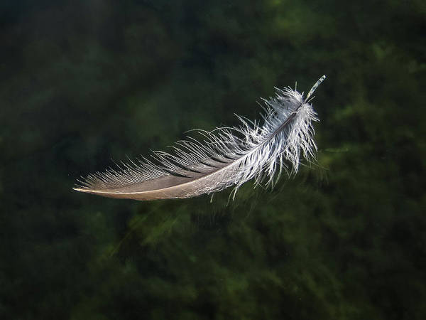 Floating Feather Poster