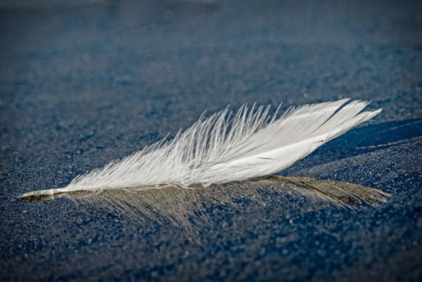 Floating Feather Reflection Poster