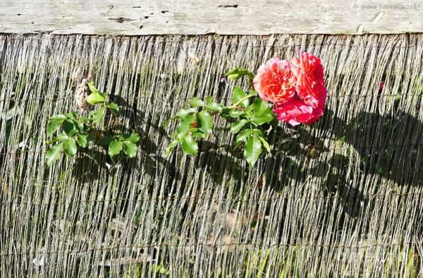 Floral Escape Poster