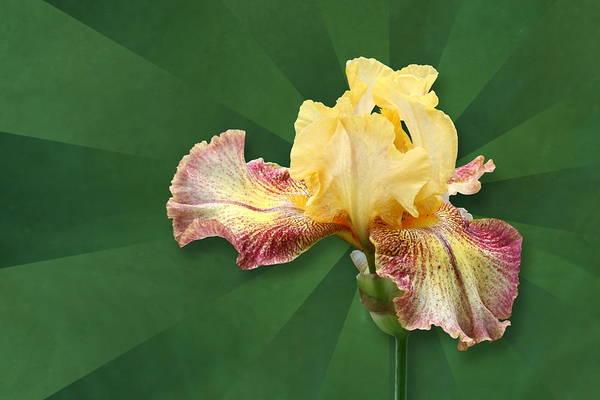 Floral Radiance Poster