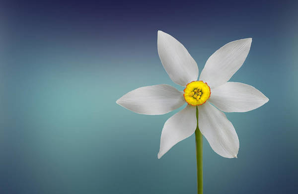 Flower Of Paradise Poster
