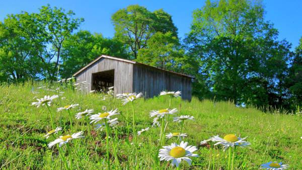 Flowering Hillside Meadow Poster