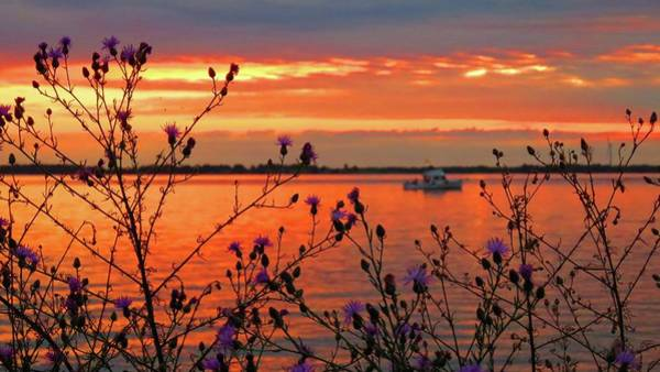 Flowers Along The Shore At Tibbetts Point  Poster