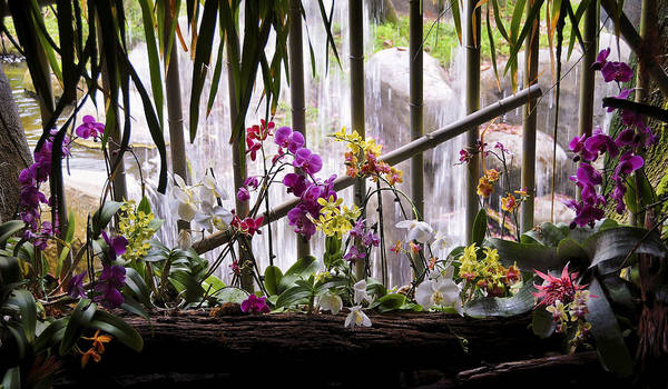 Flowers And Waterfall Poster