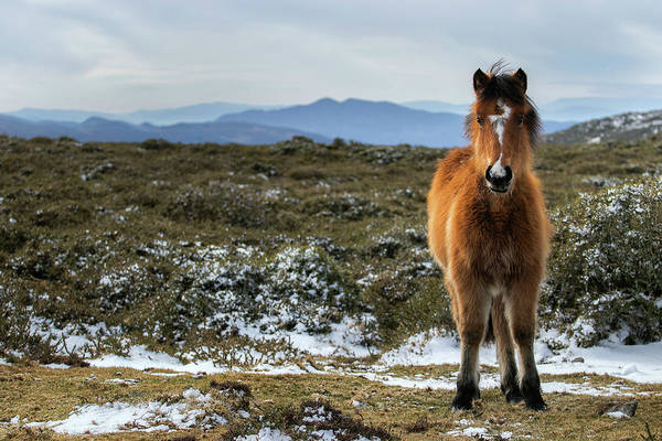 Foal In The Mountains Poster