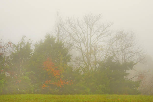 Fog In Autumn Poster