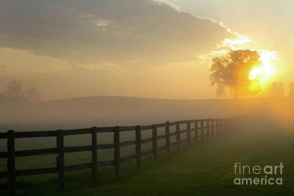 Foggy Pasture Sunrise Poster