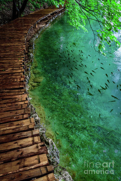 Footpaths And Fish - Plitvice Lakes National Park, Croatia Poster