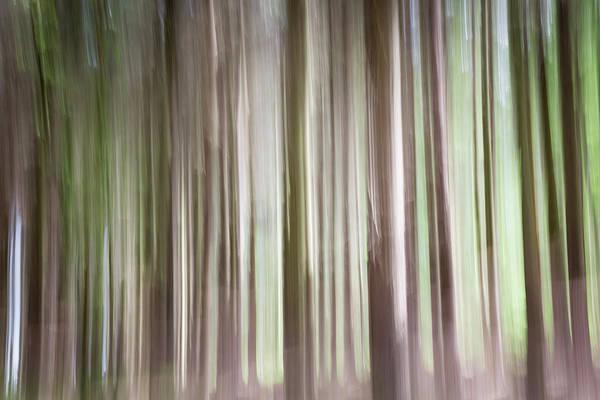 Forest Fantasy 3 Poster