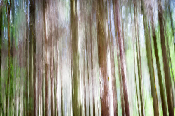 Forest Fantasy 4 Poster